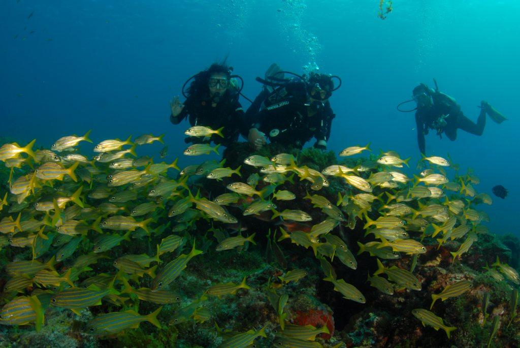 divers with fish condensed